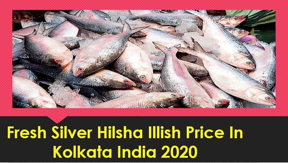 Fresh Silver Hilsha Illish Price In Kolkata India 2020